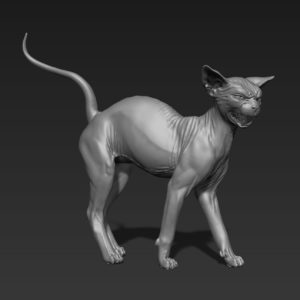 3D model of a Spynx Cat to create realistic animal anatomy sculpted in ZBrush by 3D digital artist Anna Schmelzer